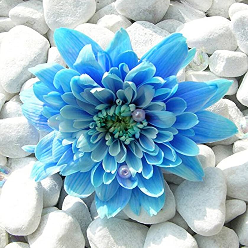 5D DIY Diamond Painting Full Square Drill Picture Embroidery Cross Stitch Craft Kit Wall Home Hanging Decor Blue Flower