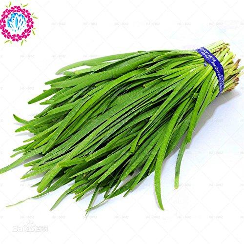 Vente chaude Ciboulette chinois Graines 100Pcs Leek Ail Bonsai non-OGM Graines de légumes bio pour jardin Livraison gratuite