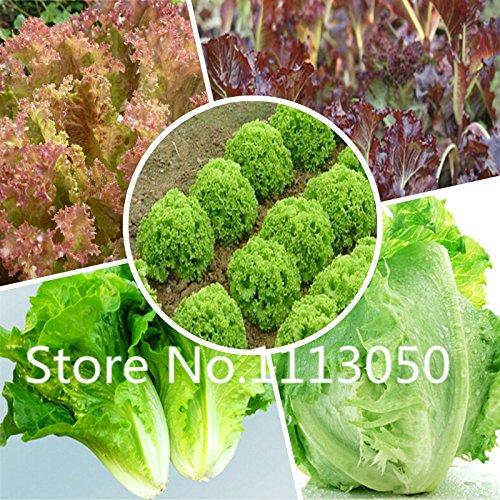 Vente! 200pcs 10 types Bonsai Laitue Semences 100% Blooming bio Véritable légumes Graines Jardin des plantes