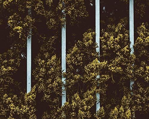 HCDZF Kit de pintura al óleo para adultos, pintura al óleo con pinceles, pigmento acrílico – hojas de plantas valla verde (sin marco 40 x 50 cm)