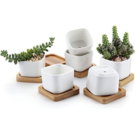 Amazon Com T4u 2 Inch Small White Succulent Planter Pots With Bamboo Tray Square Set Of 6 Ceramic Succulent Air Plant Flower Pots Cactus Faux Plants Containers White Modern Decor For Home And