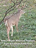 How To Plant Whitetail Institute Pure Attraction Food Plots