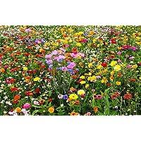 Soteer Seed House - 50pcs Mezcla de flores raras semilla de flores silvestres mariposa y abeja amigable mezcla de pradera flores semilla perenne resistente