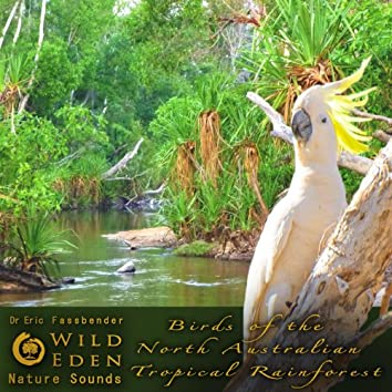 Birds of the North Australian Tropical Rainforest (feat. Dr Eric Fassbender)