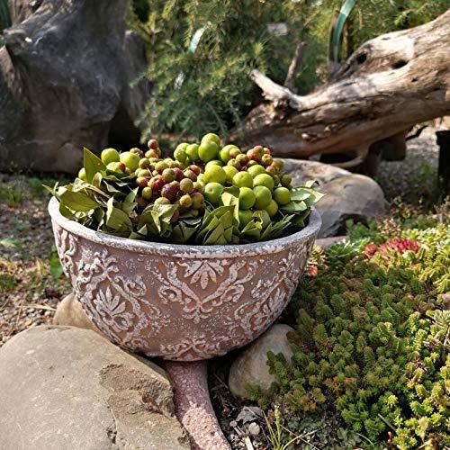 2x Plantas Maceta de cemento set Jardinera para suculentas Macetas grandes de piedra resistentes a...