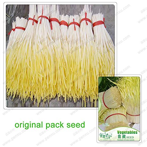 50 graines/Pack, quatre saisons germoir ciboulette graines de légumes, graines Ciboulette, légumes Balcon Leek