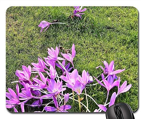 Mausemat Pflanze Herbstzeitlose Lily Familie Blumen Rosa Standardgröße Bürocomputer Langlebige Diy-Spielmatte Rutschfeste Mauspads Mausmatte Tisch Schreibtisch Tastatur 25X30Cm Be