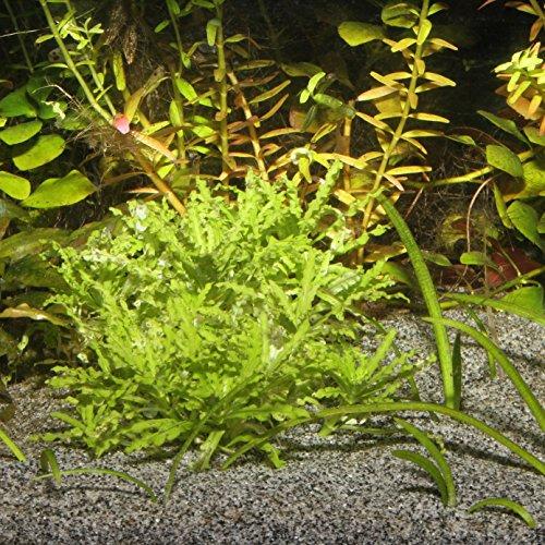 JBL Sansibar 67063, Bodengrund für Süß- und Meerwasser Aquarien, 10 kg, Grau - 2