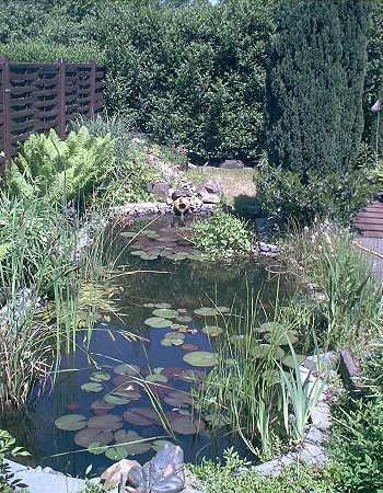 Über 20 Wasserpflanzen für den Gartenteich, Teich