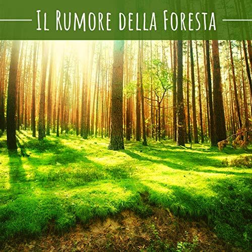 Il rumore della foresta