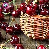 10pcs cereza gigante raro Nuevos productos delicioso dulce de la cereza de semillas, semillas del árbol frutal poted alimentos frescos de envío gratuito