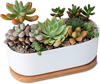 Furn Aspire Designer Ceremic Oval Planter Pot for Succulent and Cactus with Bamboo Tray Decorate at Home Office Table Desk top