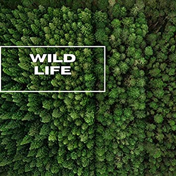 Wild Life - Forest Nature Sounds