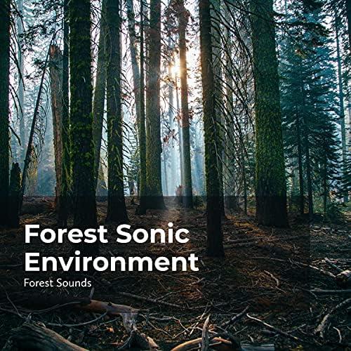 Forest Sounds, Rainforest Sounds & Ambient Forest