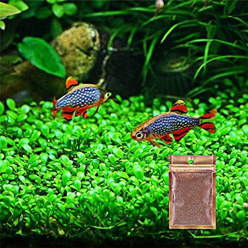 Zafina Aquarium Grass Plant Seeds, Easy to Grow Water Grass Seeds, Fast Growing Aquarium Carpet Seeds - Creates a Natural Ecosystem for Your Fish