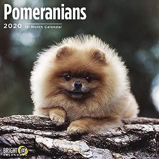 2020 Pomeranians Calendar 16 Month 12 x 12 Wall Calendar by Bright Day Calendars