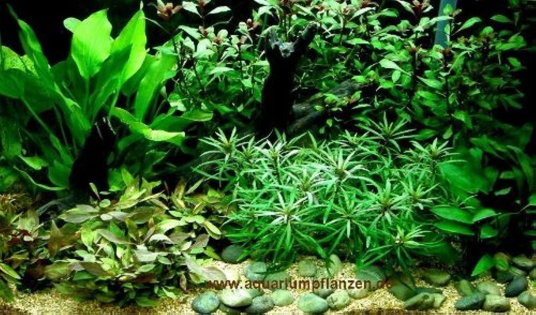 Aquarium Plant Set 100200 l aquarium (6)