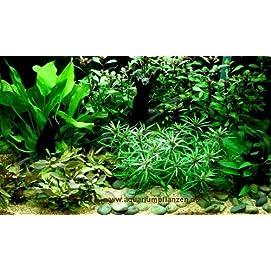Komplettes Wasserpflanzensortiment + Dünger, 12 Bund + 2 Mooskugeln Aquarienpflanzen für alle Bereiche