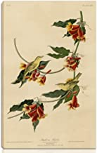 Berkin Arts John James Audubon Stretched Giclee Print On Canvas-Famous Paintings Fine Art Poster Reproduction Wall Decor-Ready to Hang(Rathbone Warbler)#NK