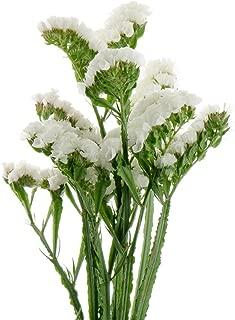 White Statice seeds - Limonium sinuatum