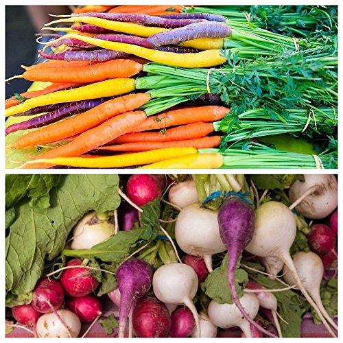 2 en 1 - Carotte multicolore et radis multicolore - RUBAN DE GRAINES - graines