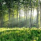 Papier Peint Mural Paysage Nature Forêt Verte 450X350Cm Autocollant Pour Salon Chambre Bureau Couloir Enfant Garcon Fille Ado Décoration Affiche
