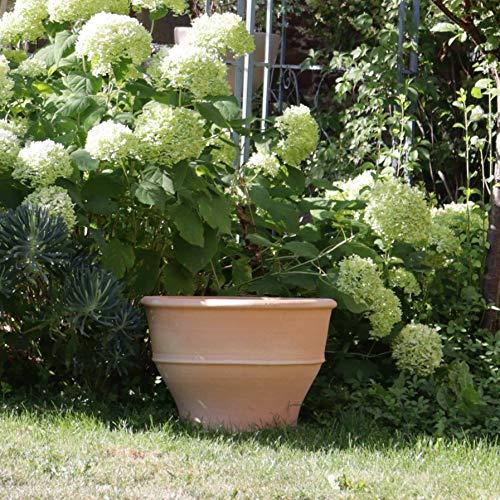 Kreta-Keramik | frostfester handgefertigter Terracotta Blumentopf/Pflanzgefäß | 50 cm | groß | Keramik für Außen Garten Terrasse Deko, Buxus