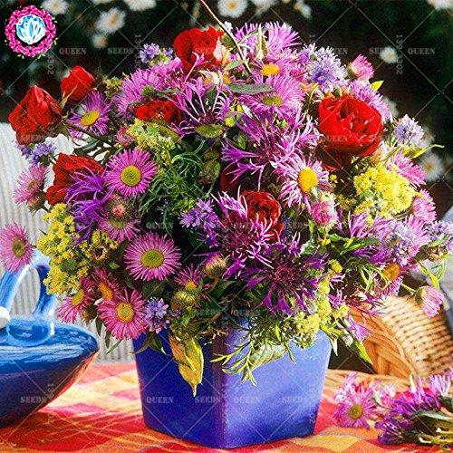 11.11 Big Promotion! 100 pcs/lot rares graines de Bleuet coloré arbre chinois jardin graine flowerbonsai & maison plante herbe organique 1