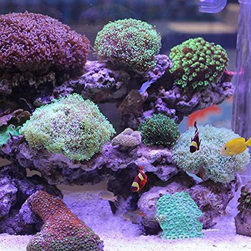 SALUTUYA Flusssand für Aquarium 3-5mm für Aquarium