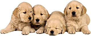 Paper House Productions M-0308E Golden Retriever Pups Magnet, 3.75 x 1.25 Inch (Pack of 1)