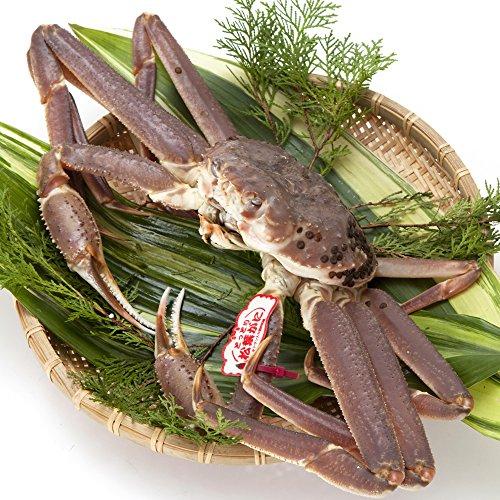 日本海市場 贈答用タグ付き 特上松葉ガニ(ズワイガニ)姿 特大サイズ1枚(活1kg前後)「本物」の松葉ガニを産地直送でお届けします 活ガニ お歳暮 ギフト対応