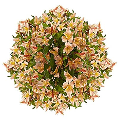 GlobalRose Orange Alstromeria- 120 Blooms Peruvian Lily- 30 Stems Fresh Flowers for Delivery from Globalrose