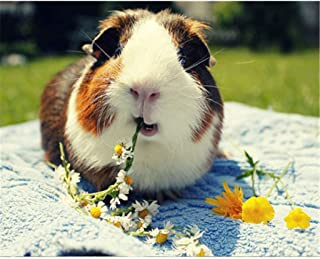 Best guinea pig painting Reviews