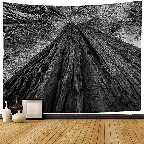 Tapestry Wall Hangings Drive Green Towering Forests Red Tree Wood Scenic Redwoods Nature Parks Outdoor Design Park Black Wall Blanket for Bedroom Wall Decor 80X60inch
