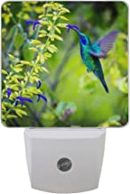 Naanle Set of 2 Beautiful Green Violet Ear Hummingbird Feeding Floral Flower On Fuzzy Green Woodland Auto Sensor LED Dusk to Dawn Night Light Plug in Indoor for Adults