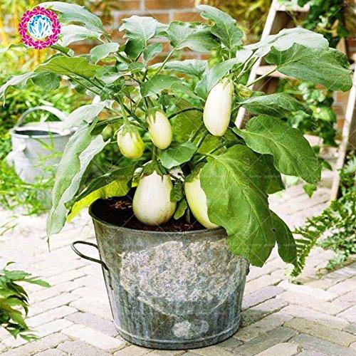 200pcs graines noires Aubergine - diamant Heirloom russe bio légumes semences de plantes non-OGM pour la maison et le jardin 4