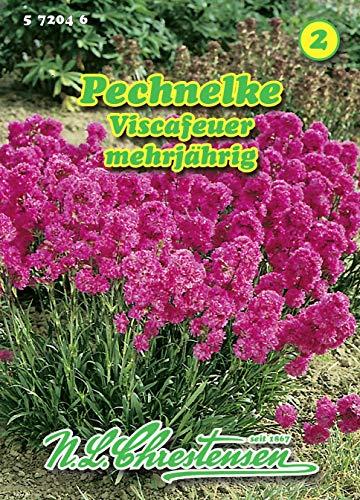 Lychnis viscaria, Pechnelke, Viscafeuer reinweiß N.L.Chrestensen Samen 572046-B