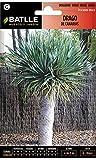 Semillas de Flores - Drago de Canarias - Batlle