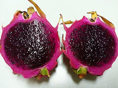 Lanterne chinoise doux champignons Graines Plantes principal Courtyard délicieux fruits Graines 40 particules/Lot Y019