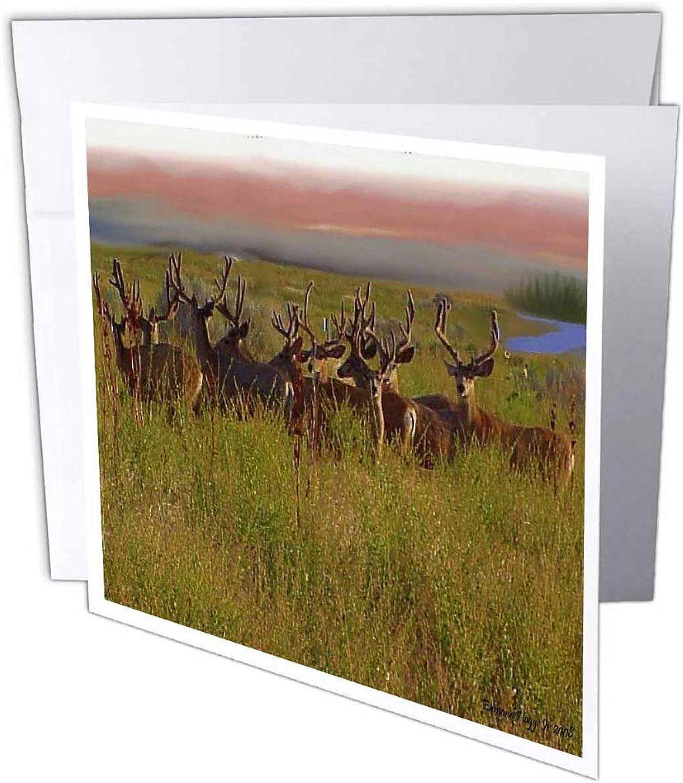 3dRosa gc_13739_2 Grußkarten Farbeado Weißtail , , , 15 x 15 cm, 12 Stück B07BJCGCCG | Starke Hitze- und Hitzebeständigkeit  | Die Farbe ist sehr auffällig  | Professionelles Design  5da681