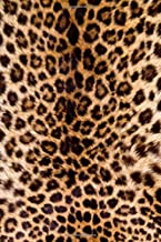 Best leopard print diary Reviews