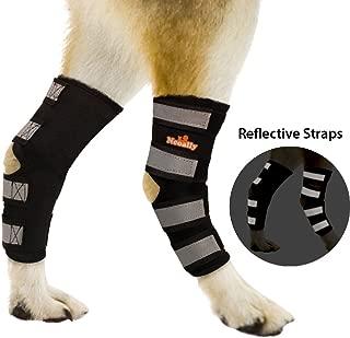 canine rear leg brace