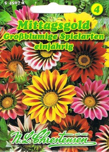 Mittagsgold Großblumige Spielarten , einjährig, dauerblüher in reichem Farbenspiel 'Gazania Hybride' Mittagsblumen