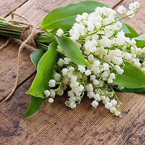 50 pcs/sac Muguet Graines de fleurs rares Indoor de Bell Orchidée arôme riche Bonsai plantes en pot Balcon bricolage jardin multicolore