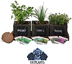 FATPLANTS Cedar Planter Box - Complete Herb Garden Indoor Kit - Herb Growing Kit - Grow Cooking Herbs Basil, Chives, Thyme, Oregano, Parsley & Cilantro (Wicker Brown)