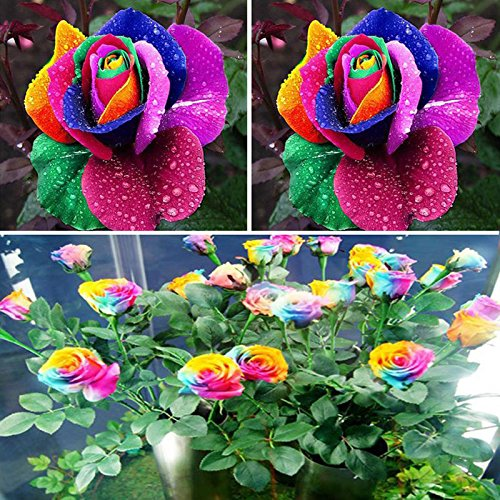BigFamily - Juego de 600 semillas de flores multicolores para jardín, diseño de arcoíris