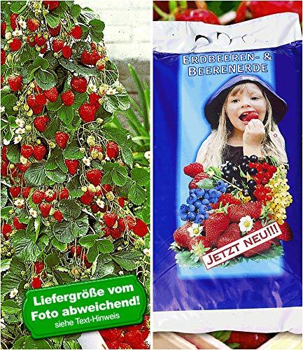 BALDUR Garten Kletter-Erdbeere® 'Hummi®'& Spezial-Erdbeer- & Beeren-Erde 15 Liter, 1 Set Erdbeerpflanzen für Balkon und Terrasse