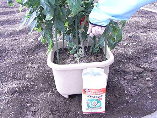 使い方 オルトラン 粒 剤 殺虫剤オルトランの正しい使い方