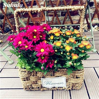 Grosses soldes! 50 Pcs Daisy Graines de fleurs crème glacée parfum de fleurs en pot Chrysanthemum jardin Décoration Bonsai Graines de fleurs 10