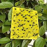 Vascinate 20PCS Yellow Sticky Fly Traps 20x15cm Trampas Doble Cara, Pegatinas de Papel para Moscas, atrapasucidas, Tabla Adhesiva para Plantas voladoras, Insectos, Hojas y Lazos (incluidos), Amarillo